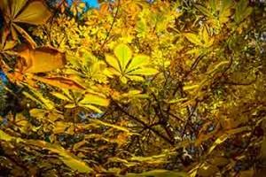 Blätter verfärben sich. Es ist Herbst.